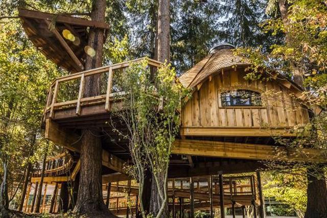 Microsoft postavil zaměstnancům na stromech domky